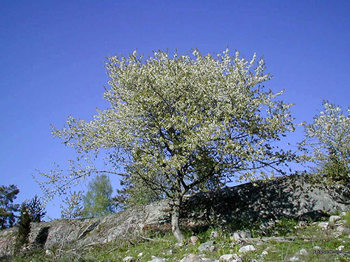 Svenska landskap