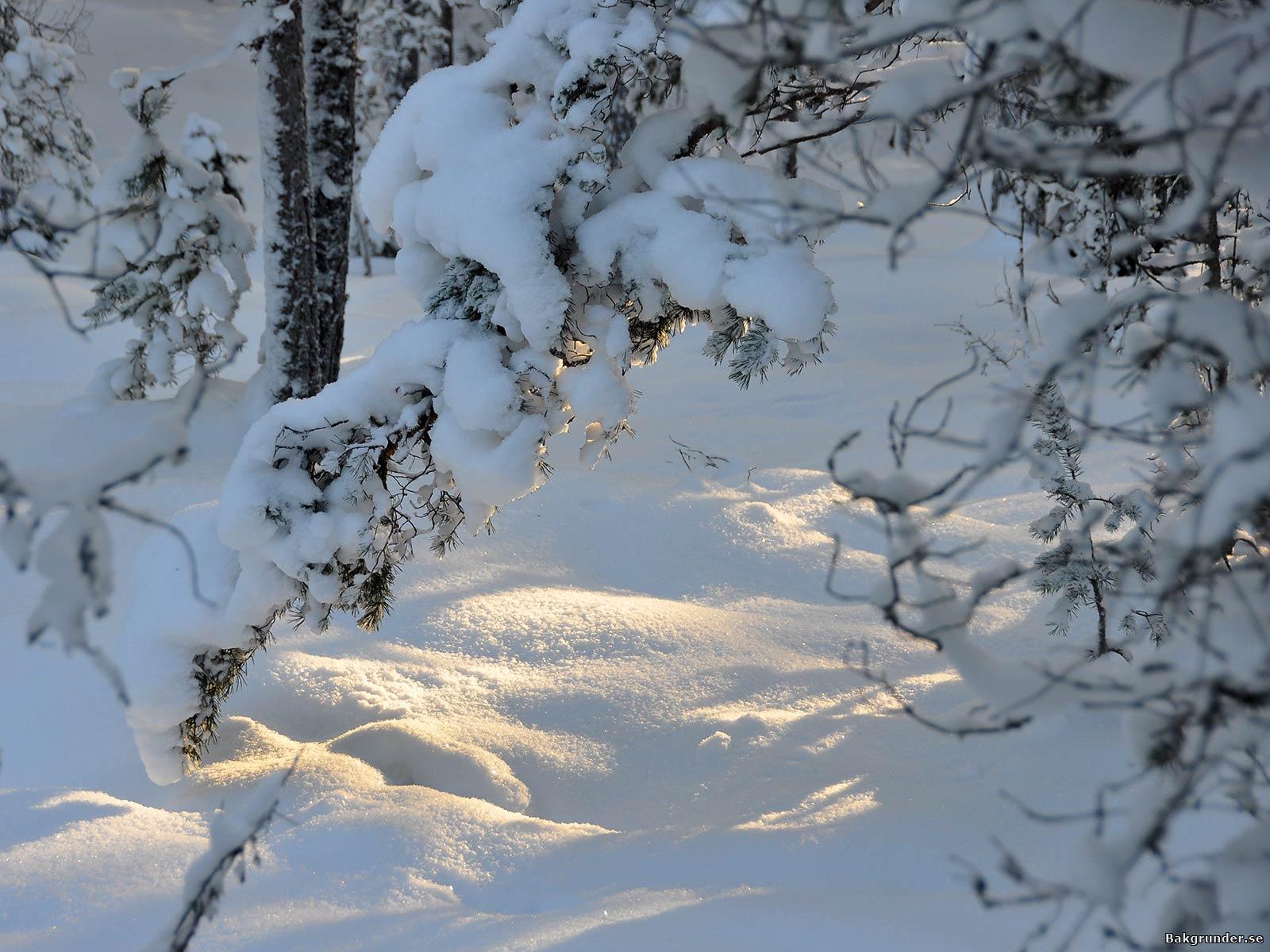 Djup snötäcke i solsken