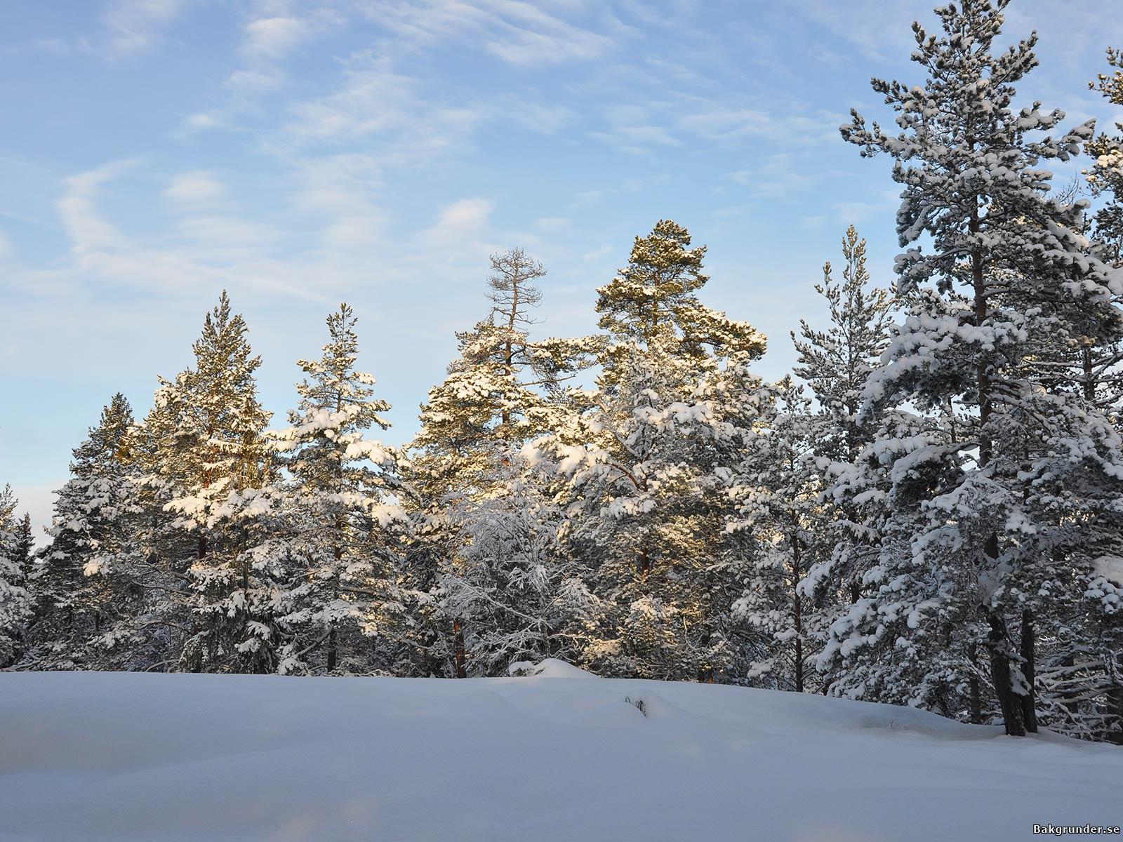 Solsken i vinterlandskap