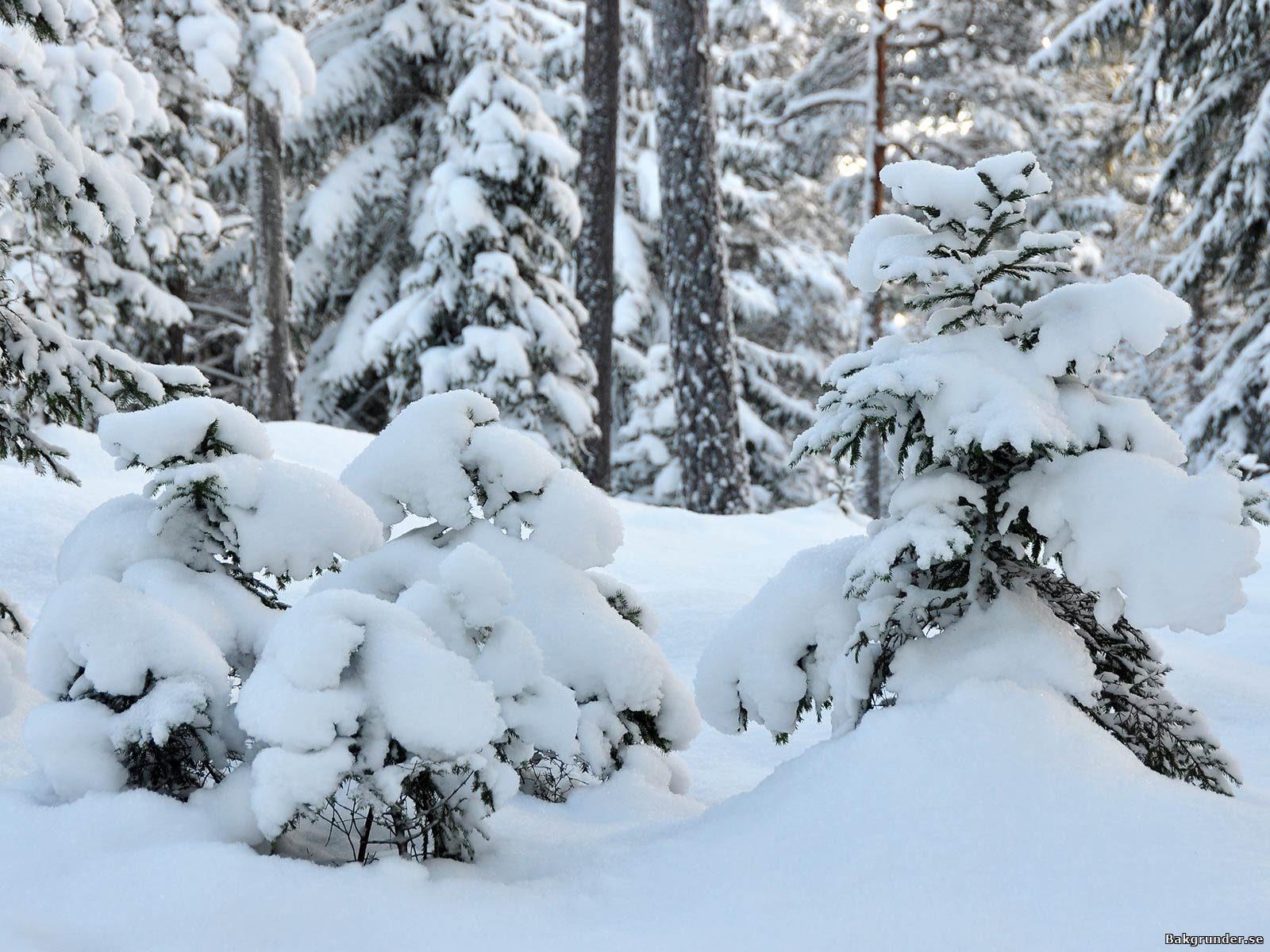 Vinteridyll med härlig djup snötäcke